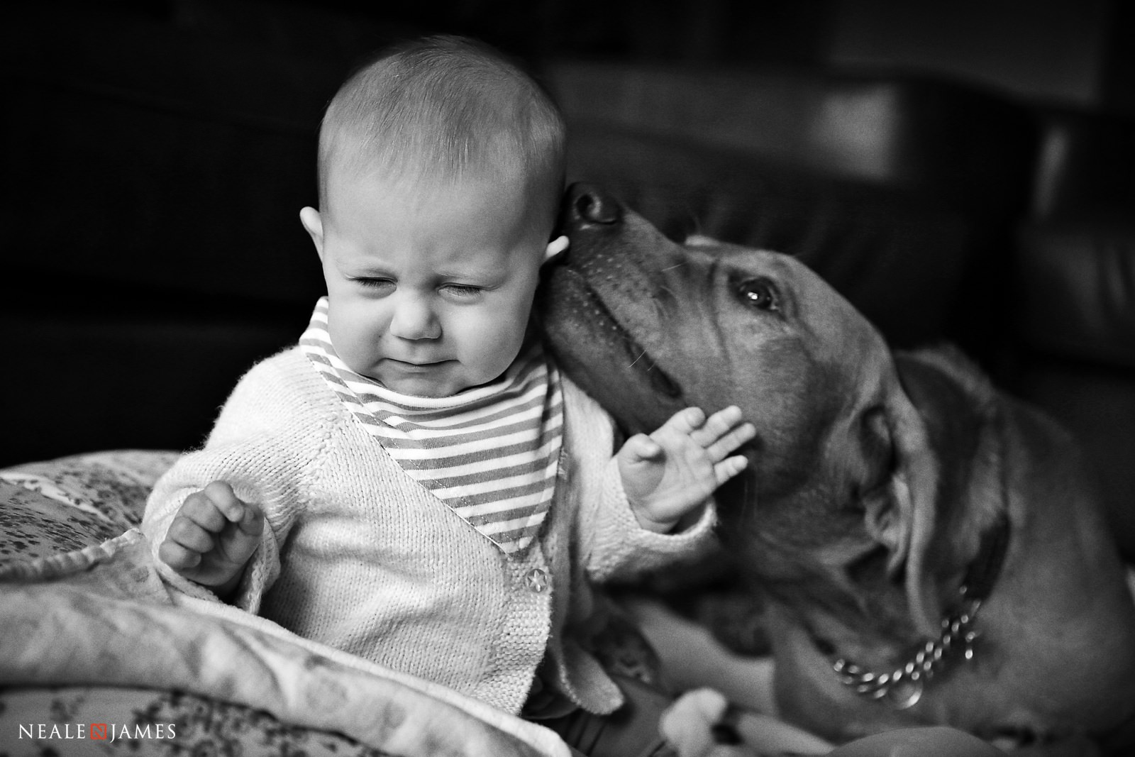 A picture of a baby being licked in the face by a playful dog